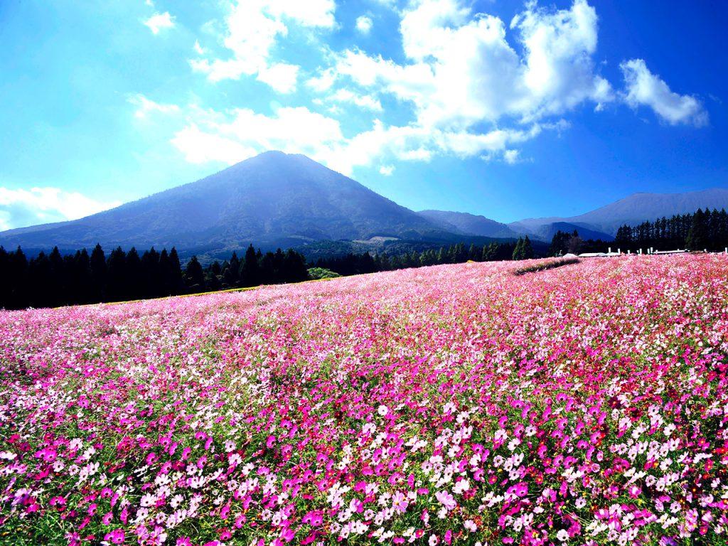 宮崎県 生駒高原(フリー画像)